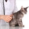 Ветеринарные клиники в Знаменке